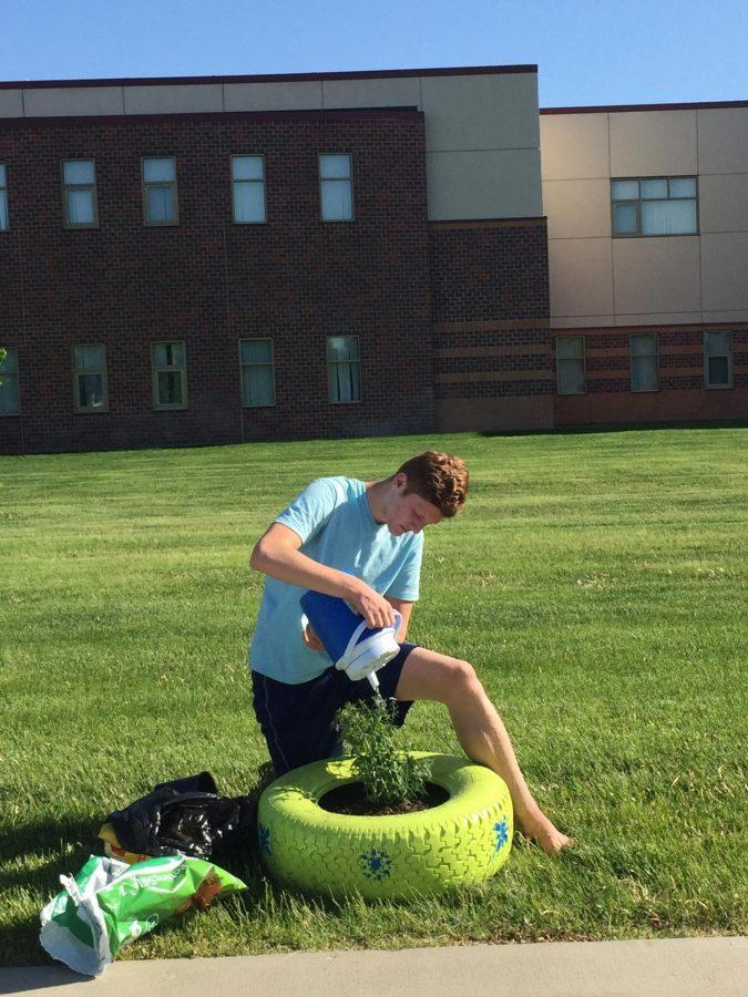 Riley Dehr planting daisies in front of NPHS last spring.